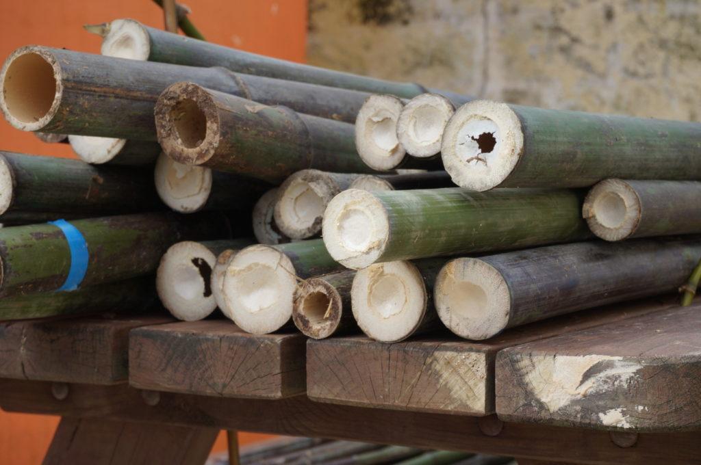 Cannes de bambous coupés